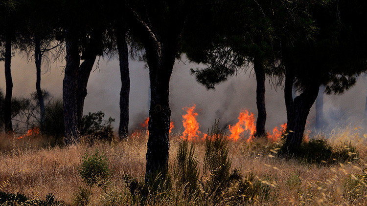 Evacuan a más de 2.000 personas por un incendio forestal en España (VIDEO, FOTOS)