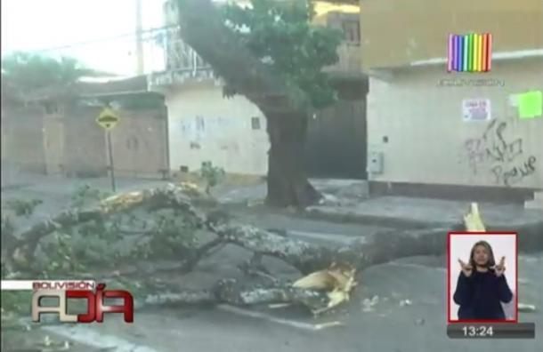 Fuertes vientos provocan emergencia por caída de árboles, techos y estructuras