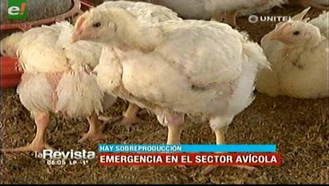 Sector avícola está en emergencia debido a la sobreproducción de pollo