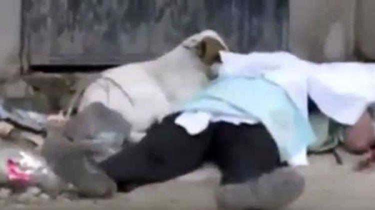 A Grifi no le han importado los vicios de sus dueños (Foto: YouTube)