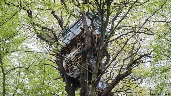 Los ecologistas están tratando de proteger el bosque con casas en los árboles.