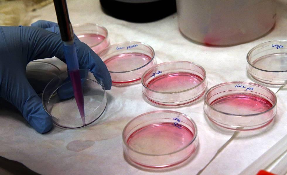 Cultivo celular en un laboratorio