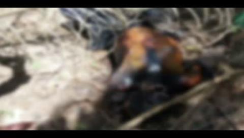 Hallan un cadáver en descomposición en Chané