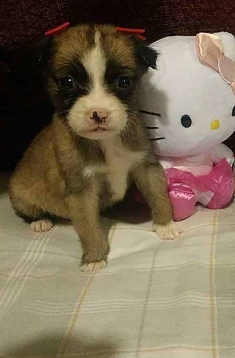 """Cristalita"" esperando a ser adoptada. (Foto: Facebook)"