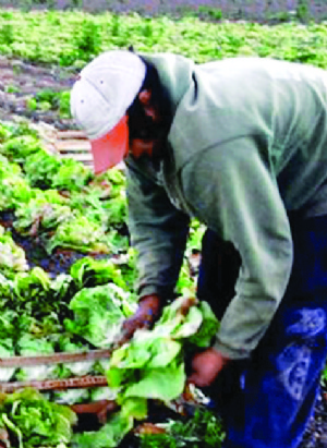 Argentina: corregirán norma que discrimina bolivianos