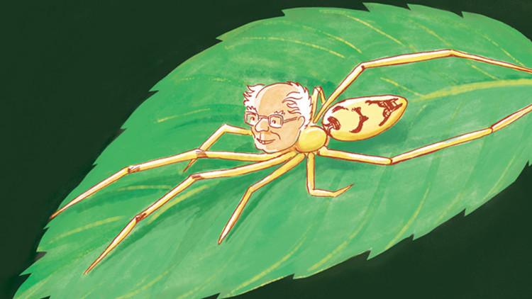 Bautizan a nuevas especies de arañas