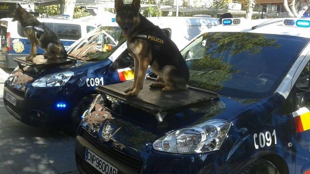 Los adoptantes de los perros ex agentes iban a explicar la labor de los canes