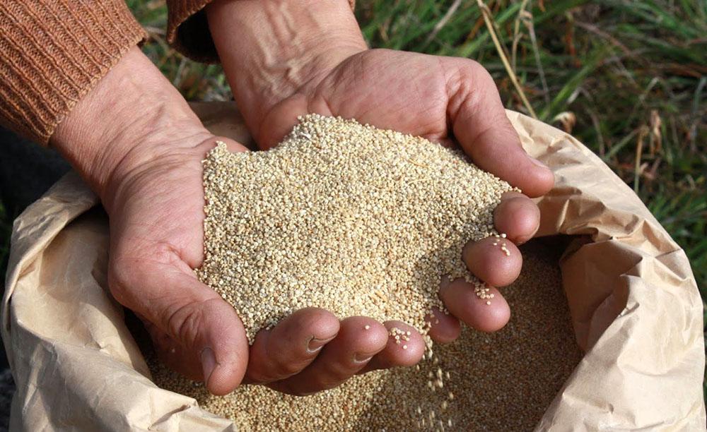 Resultado de imagen de toneladas de semillas