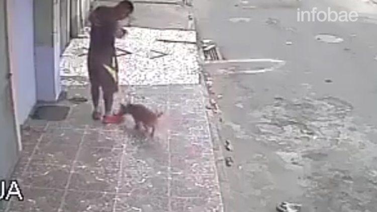 Otro perro se acercó, atraído por el olor