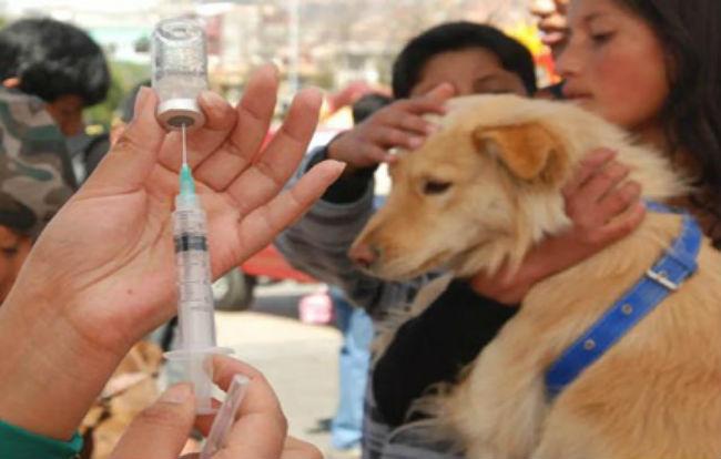 Resultado de imagen de vacunación contra la rabia