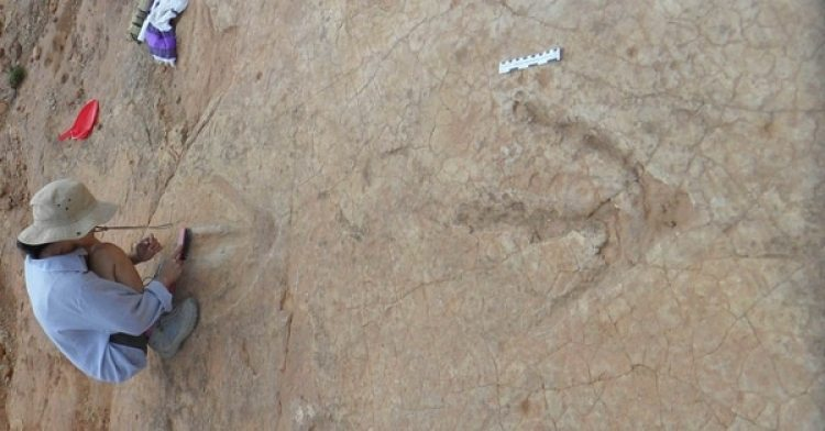 Una investigadora junto a las huellas del dinosaurio. (Gentileza: El Mundo)