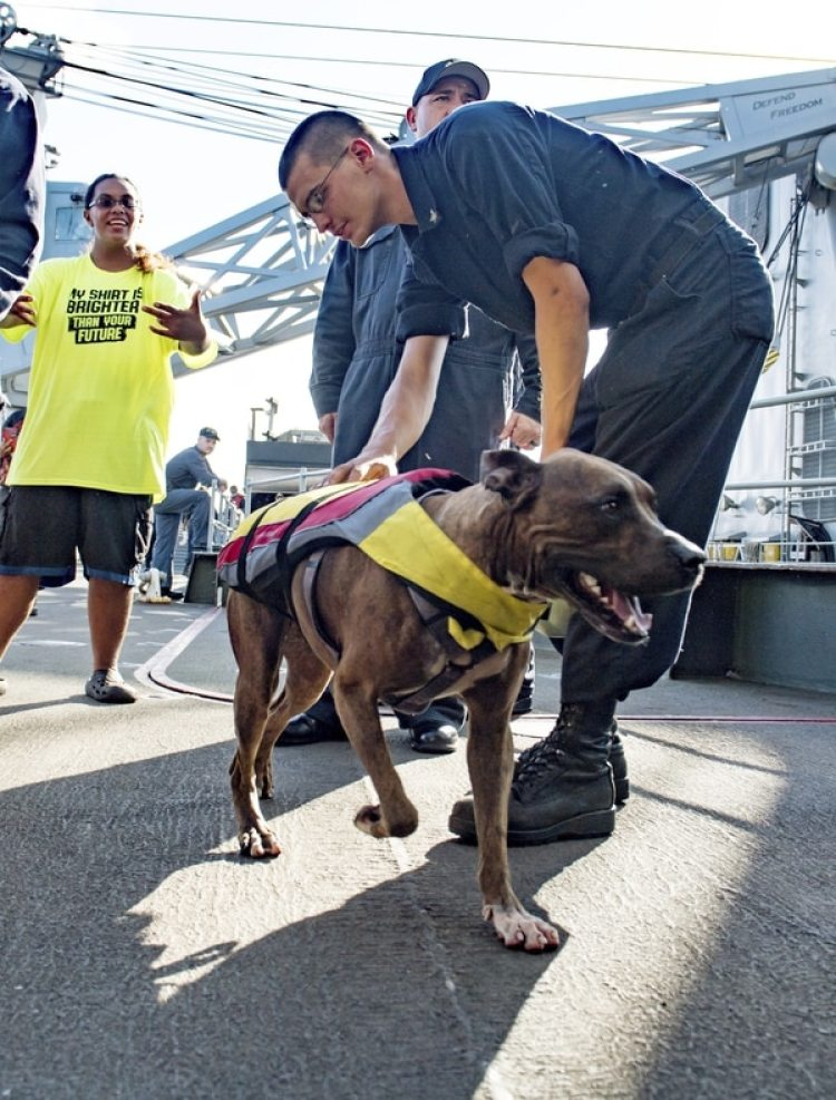 Zeus, uno de los perros rescatados (Mass Communication Specialist 3rd Class Jonathan Clay/U.S. Navy via AP)