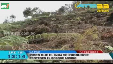 Comunarios denuncian la continuidad de explotación ilegal de madera en Coroico Viejo