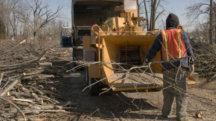 Trituradora de árboles