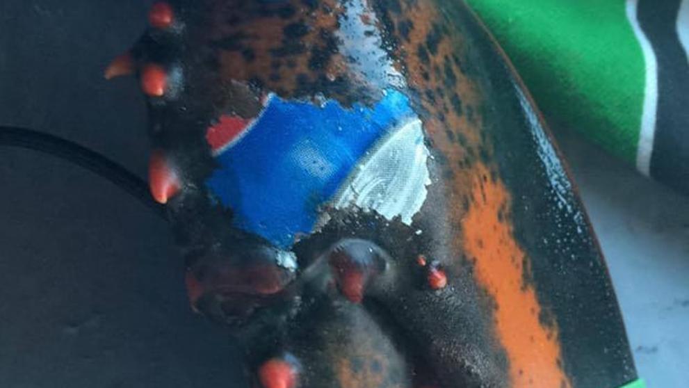 El bogavante con el logo de Pepsi 'tatuado' en una pinza que debería consternar al mundo