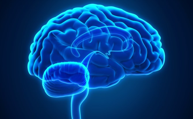 Los cinco mitos más extendidos sobre el cerebro (y por qué son falsos)