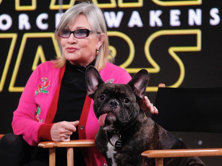 El perro de Carrie Fisher reconoció a Leia mientras veía