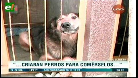 Hallazgo terrorífico en La Paz: En una casa acumulaban perros y los mataban