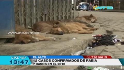 Se reportaron 12 casos de rabia canina en El Alto