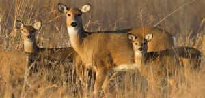 H. R. 1550, Chronic Wasting Disease Management Act.