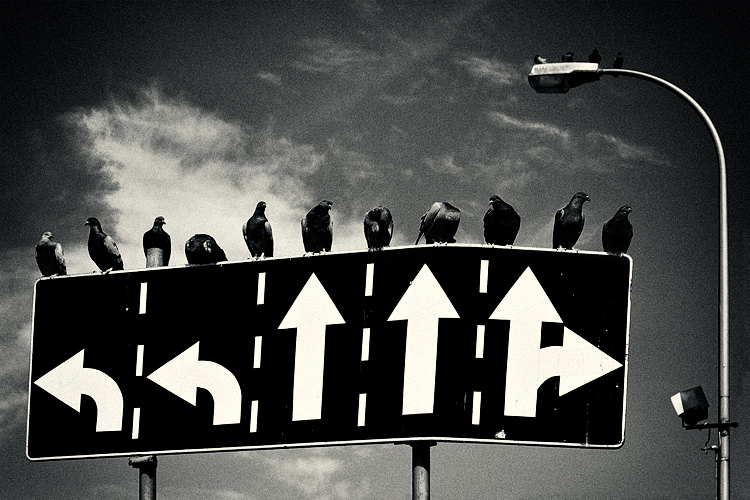 image showing crows on a multi choice road sign