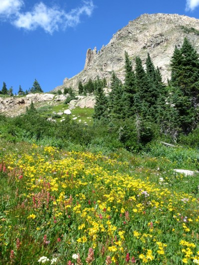 Up high, the wildflowers are still going.
