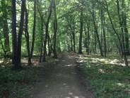 Gorgeous Deutsch Wald.
