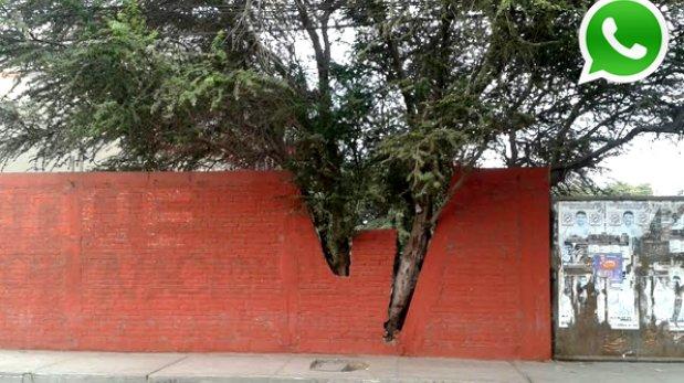 WhatsApp: la mejor muestra de respeto a los árboles en Chiclayo