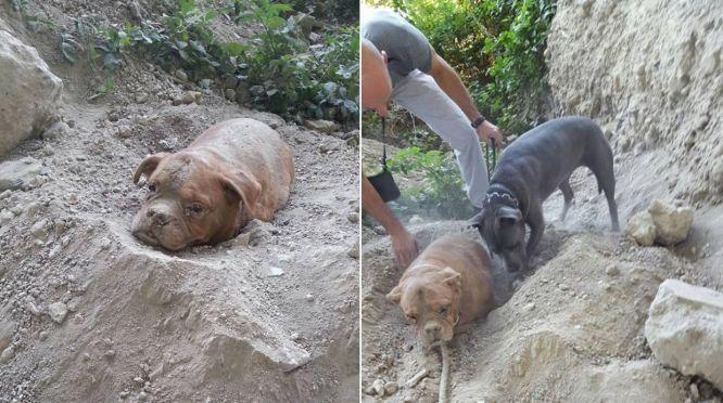 Caso de perra enterrada viva por su dueño indigna en Francia