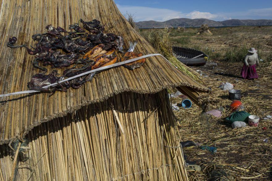 Aves y truchas atrapadas se secan en el techo de paja de una casa en Kapi Cruz Grande, una aldea en la orilla del lago Titicaca. Un estudio patrocinado por el gobierno realizado en 2014 encontró mercurio, cadmio, zinc y cobre en cuatro tipos de peces que forman parte de la dieta de la población local a niveles más altos que los recomendados para el consumo humano. (Foto: AP/Rodrigo Abd)