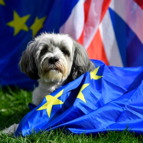 Do dogs want their 'woof' on Brexit?
