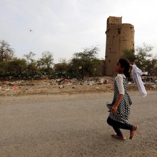 Photo Story: Swarms of desert locusts invade Yemen