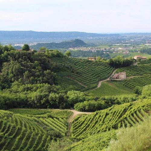 Prosecco Hills become UNESCO heritage site