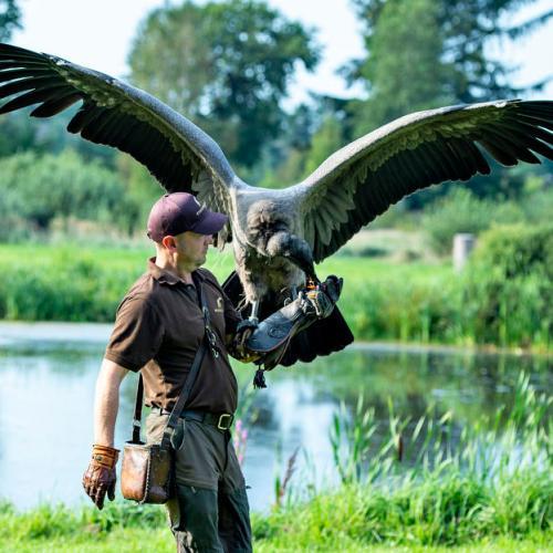 Photo story: The Flight of the Condor