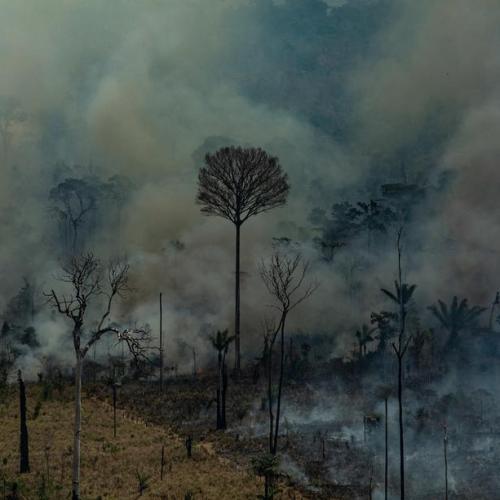 Deforestation in Brazil's Amazon rainforest rises for fourth straight month
