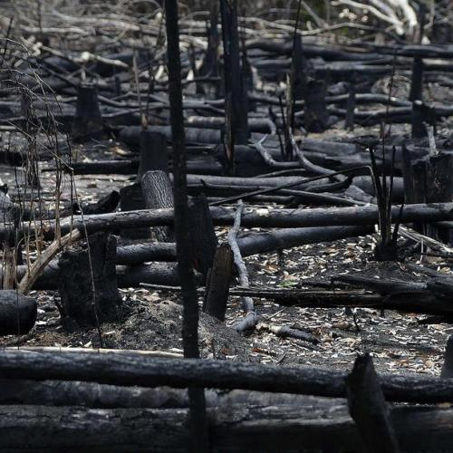 Photo Story: Aftermath of the Amazon fires