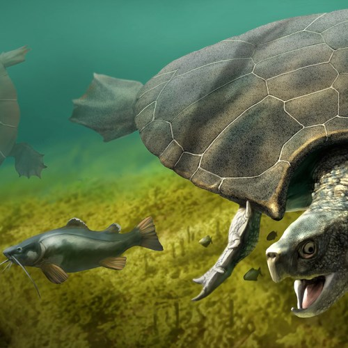 Fossil of Extinct Three Metre Giant Turtle found in South America