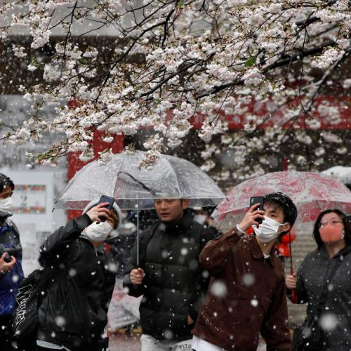 Cherry blossoms, un-seasonal snowfall and fear – Covid19 in Japan