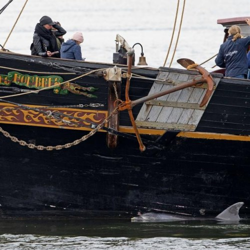 Photo Story: Sailing ship guides dolphin back into the North Sea