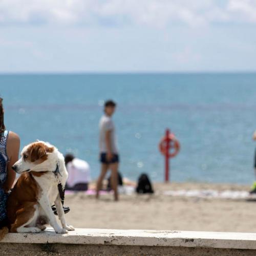 Italy reports 7 coronavirus deaths on Sunday, 1,391 new cases