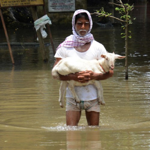 Floods in India's Assam force a million from their homes