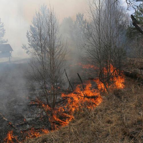 Forest fire kills 4 in Ukraine