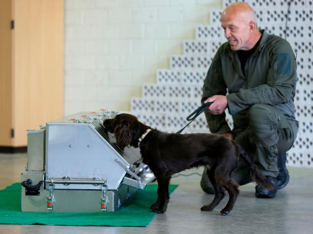 School for Service Dogs for coronavirus of Bundeswehr in Ulmen