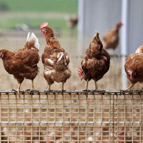 Amid COVID-19 pandemic, EU warns about outbreaks of bird flu
