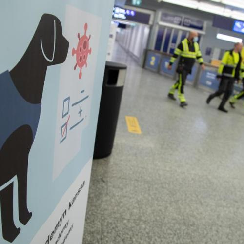 Coronavirus sniffing dogs start their work at the Helsinki-Vantaa airport in Finland