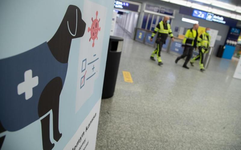 Coronavirus sniffing dogs start their work at the Helsinki-Vantaa airport in Finland