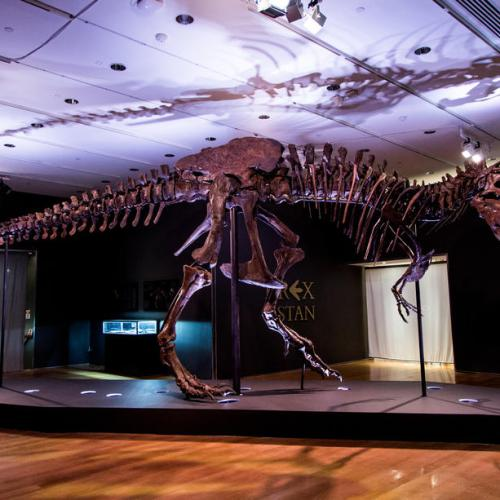Photo Story: Christie's to auction Tyrannosaurus Rex Skeleton