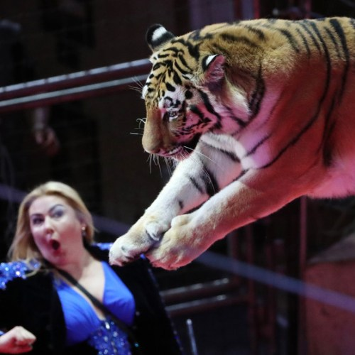 France to ban wild animals from travelling circuses