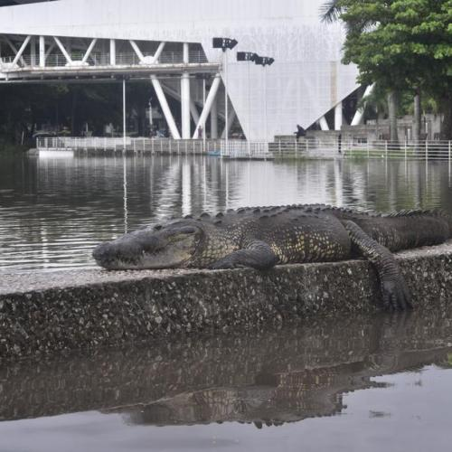 Photo story: Tropical storm Gamma brings unexpected visitor to Mexico