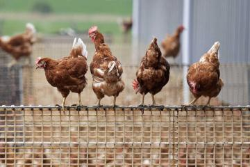 Rise inhumanbirdflucases in China shows risk of fast-changing variants-health experts